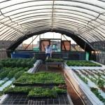 Lilypad Farms Building