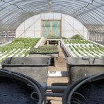 Aquaponics Training